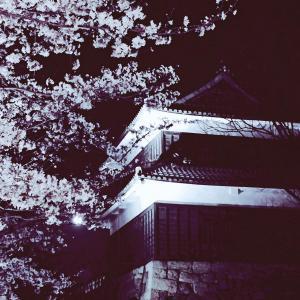 上田城跡公園 上田城千本桜まつり 西櫓