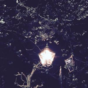 桜とガス灯 大手町通り